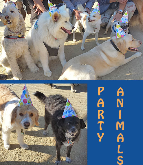 Party_dogs