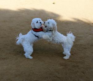 dogs_dance
