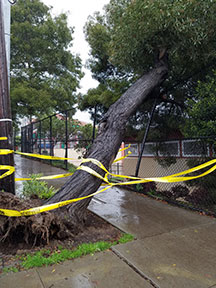 Upper Noe tree comes down in a recent 