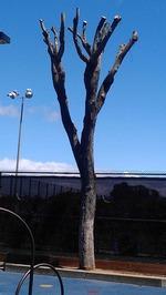 Hacked tree 2