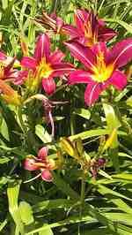 spring flowers 4 2