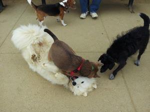 dog_wrestling
